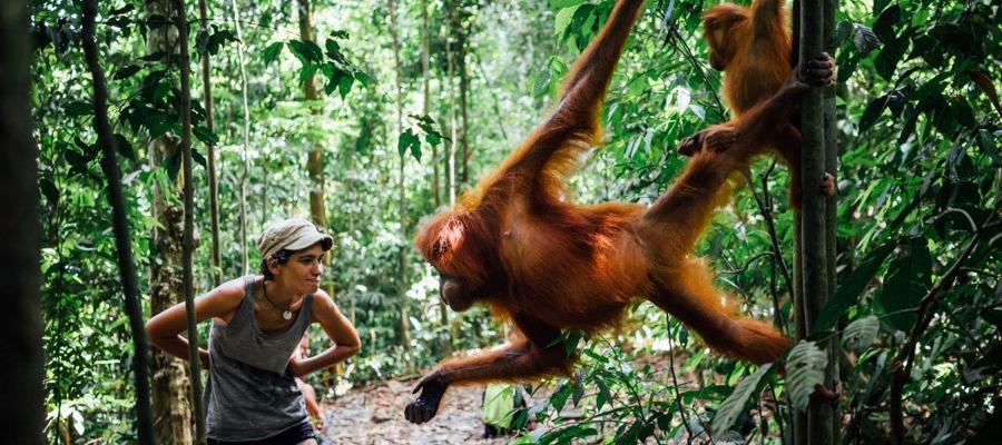 Ultimate Guide to Bukit Lawang Jungle Trekking