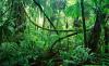 mambasa_evergreen_forest_540px