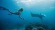 LB-Snorkeling-Manta_540x300