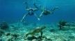 LB-Snorkeling-People_540x300